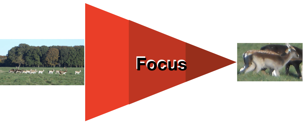 focus.001
