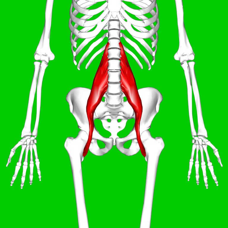 768px-psoas_major_muscle11